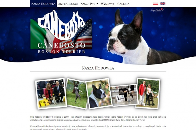 Canebosto Boston Terrier