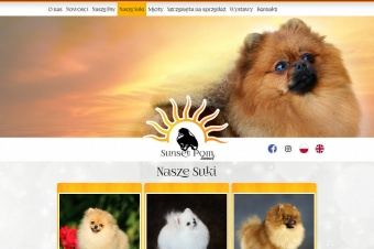SunsetPom - Pomeranian kennel