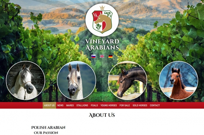 Vineyard Arabians